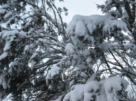 winter-6
