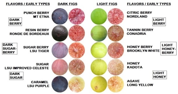 early figs by pulp and skin color