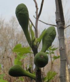 Cucumber (Nordland) (2)