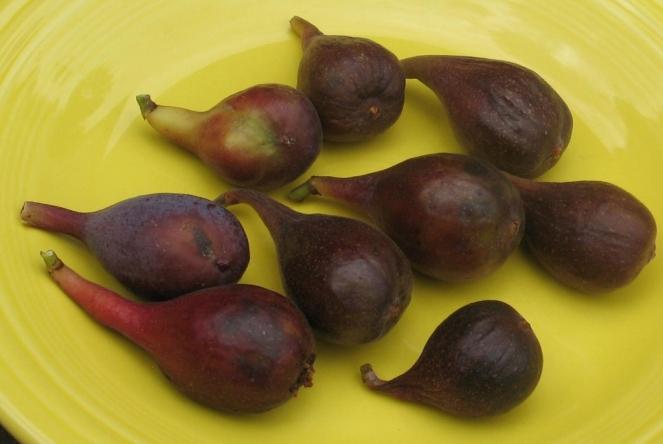 O'Rourke breba figs (2) (1024x686)