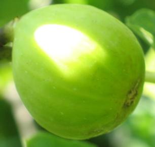 Galbun (2)
