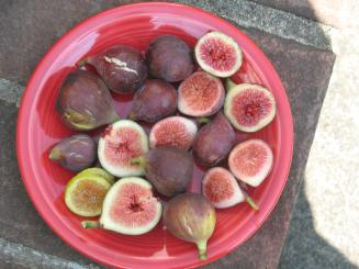 plate of figs Tiger O'Rourke Mt Etna Peter's Honey (15)