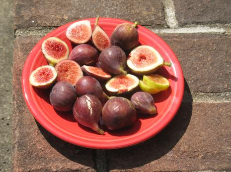 plate of figs Tiger O'Rourke Mt Etna Peter's Honey