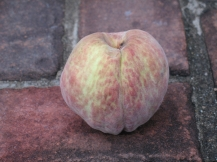 peach (12) (1024x768)