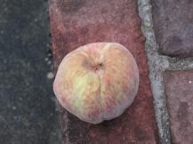 peach (4) (1024x768)