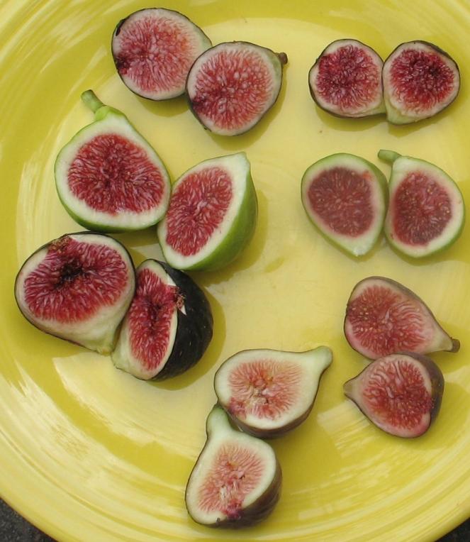 plate of figs Figo Preto Paradiso Bronze Sultane Mt Etna Calverte LSU Tiger Improved Celeste (7).JPG