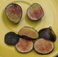 Negretta (sugar-berry)