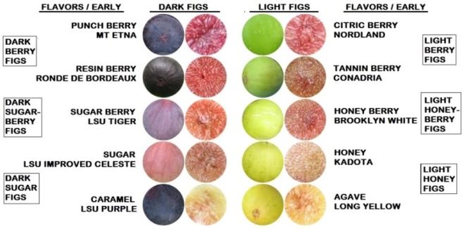 10 early dark light flavors pulp