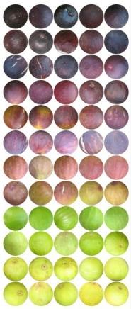 fig skin spectrum
