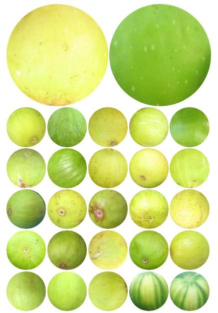 light fig skin spectrum