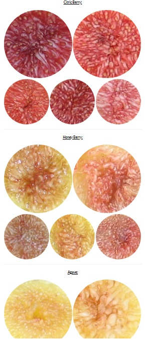 pulp by flavor profile