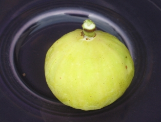 Garnsey White Seedless (13)