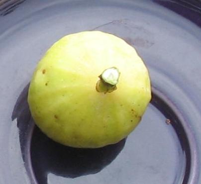 Garnsey White Seedless (14)