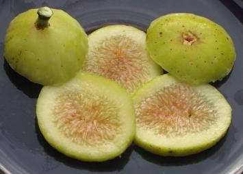 Garnsey White Seedless (4)