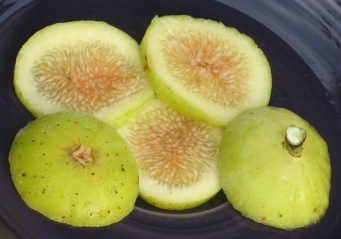 Garnsey White Seedless (7)