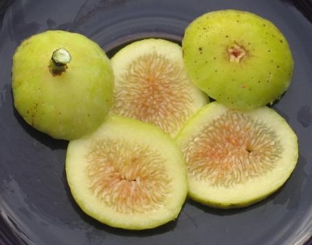 Garnsey White Seedless (9)