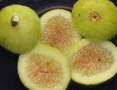 Garnsey White Seedless