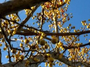 tree orchard yellow fruit